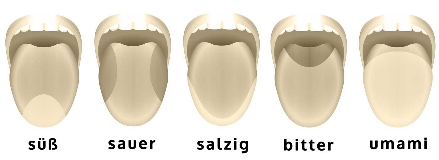 Geschmackszonen auf der Zunge süß sauer bitter salzig umami